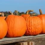 pumpkin-970233_1920